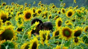 stock-footage-father-and-daughter-in-sunflower-field
