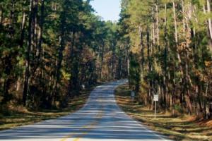 piney woods of texas