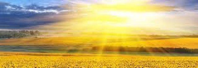 cropped-sunshine-sunflower.jpg