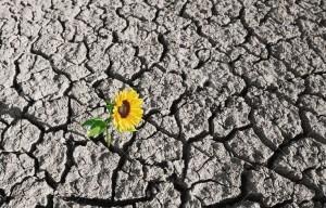 18621369-suelo-seco-de-una-tierra-desierta-y-sola-planta-que-crece-Foto-de-archivo (2)