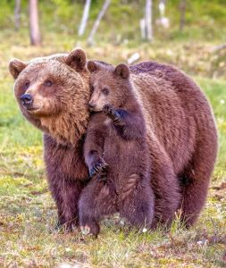 PAY-Bears
