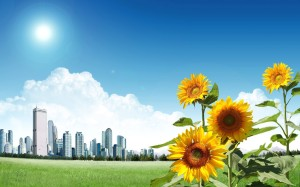 sunflowers-outside-the-city-wallpaper-1